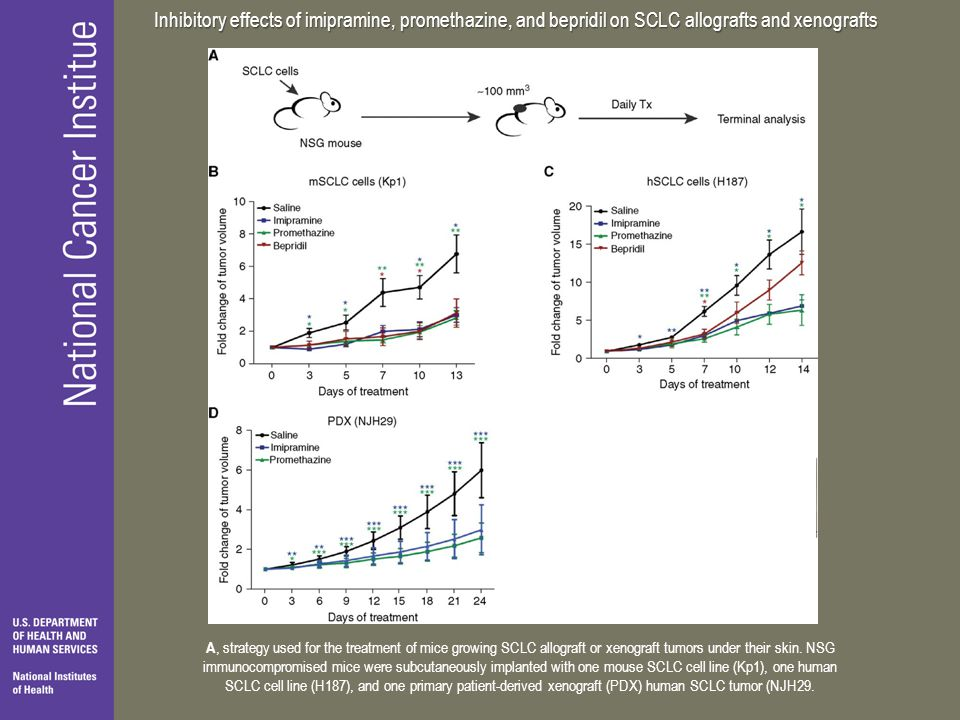 Inhibitory effects of imipramine, promethazine, and bepridil on SCLC allografts and xenografts