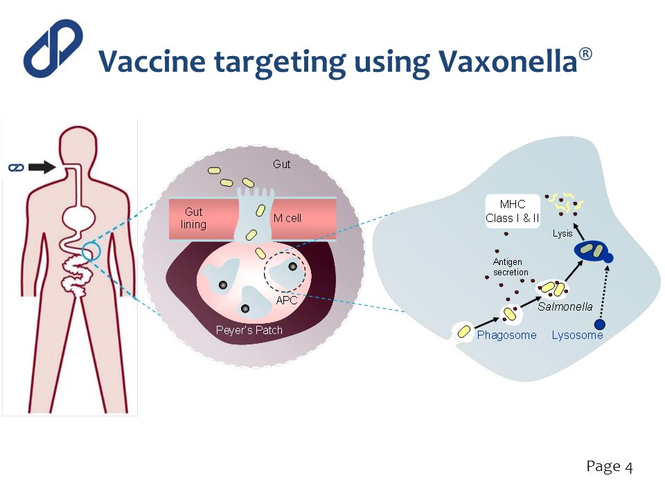 Vaccine targeting using Vaxonella®