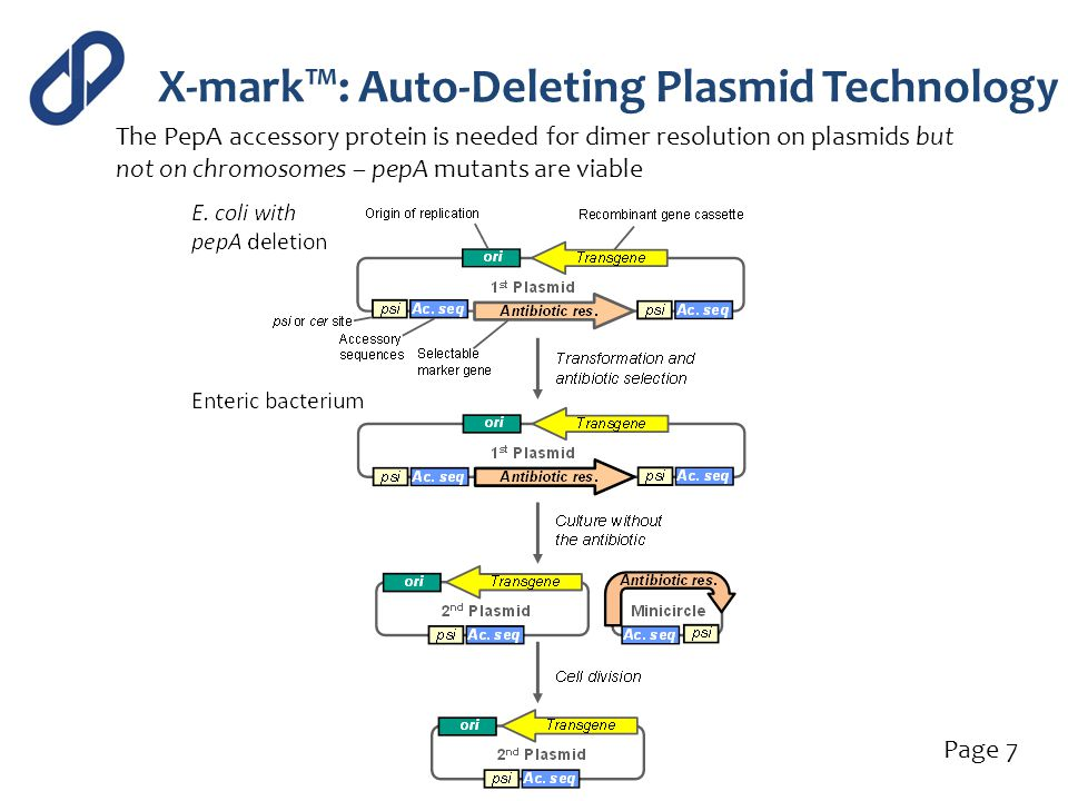 X-mark™: Auto-Deleting Plasmid Technology