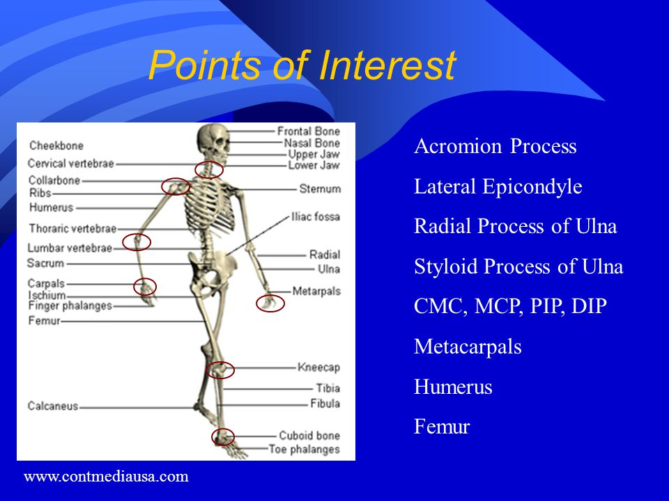 Points of Interest Acromion Process Lateral Epicondyle