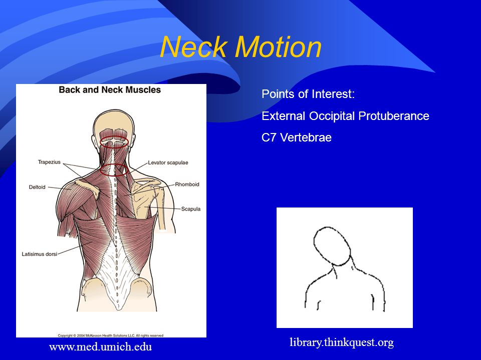 Neck Motion Points of Interest: External Occipital Protuberance