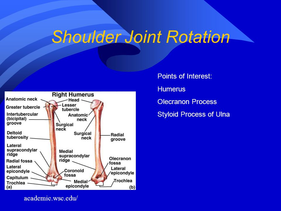 Shoulder Joint Rotation