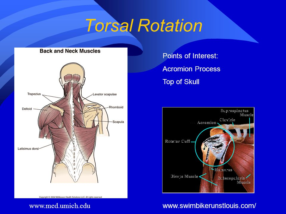 Torsal Rotation Points of Interest: Acromion Process Top of Skull