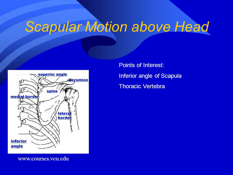 Scapular Motion above Head