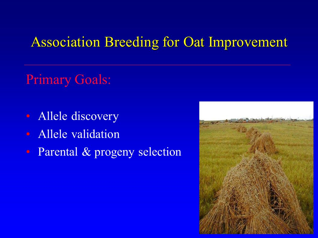 Association Breeding for Oat Improvement