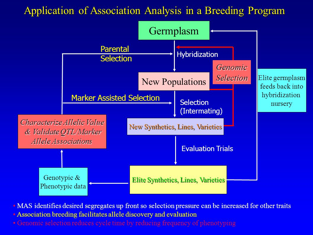 Application of Association Analysis in a Breeding Program