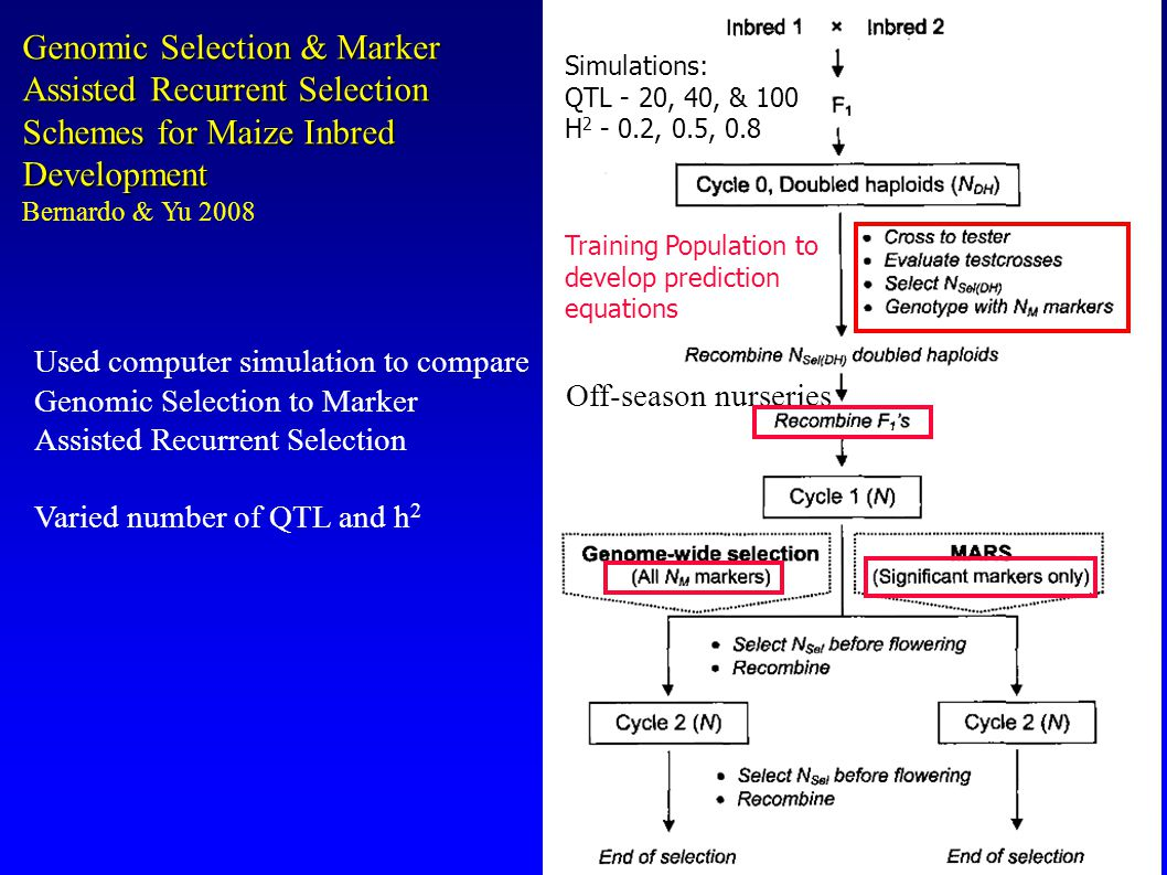 Genomic Selection & Marker Assisted Recurrent Selection Schemes for Maize Inbred Development