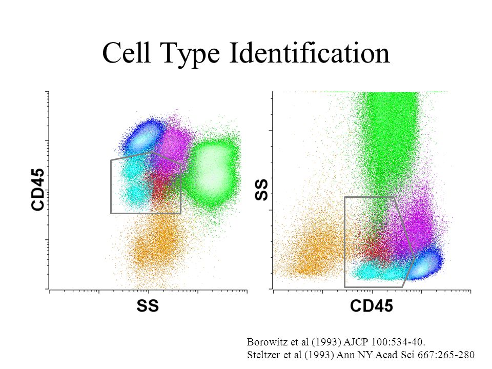 Cell Type Identification