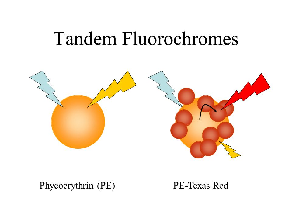 Tandem Fluorochromes Phycoerythrin (PE) PE-Texas Red