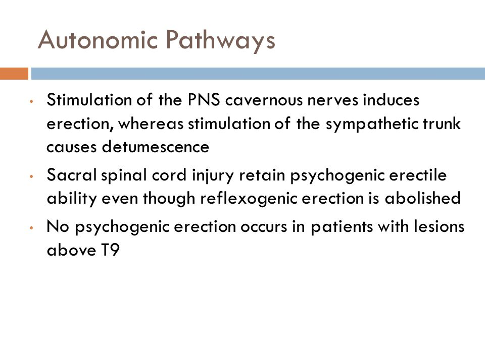 Autonomic Pathways Stimulation of the PNS cavernous nerves induces erection, whereas stimulation of the sympathetic trunk causes detumescence.