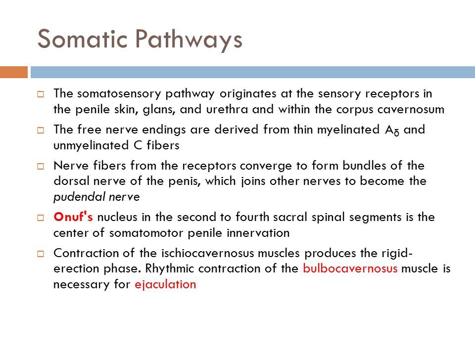 Somatic Pathways