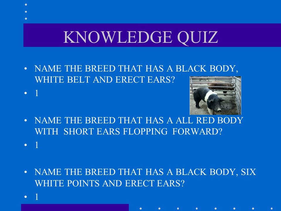 KNOWLEDGE QUIZ NAME THE BREED THAT HAS A BLACK BODY, WHITE BELT AND ERECT EARS 1.