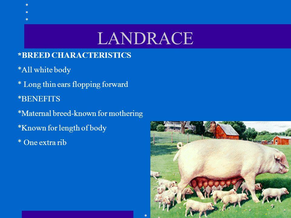 LANDRACE *BREED CHARACTERISTICS *All white body