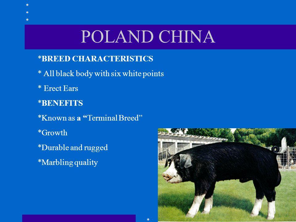 POLAND CHINA *BREED CHARACTERISTICS