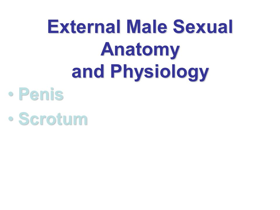 External Male Sexual Anatomy and Physiology