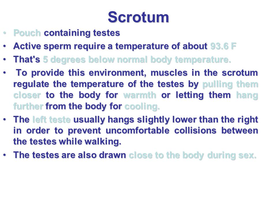 Scrotum Pouch containing testes