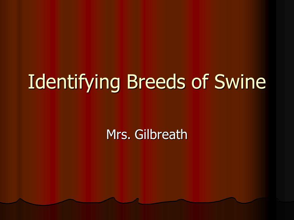 Identifying Breeds of Swine