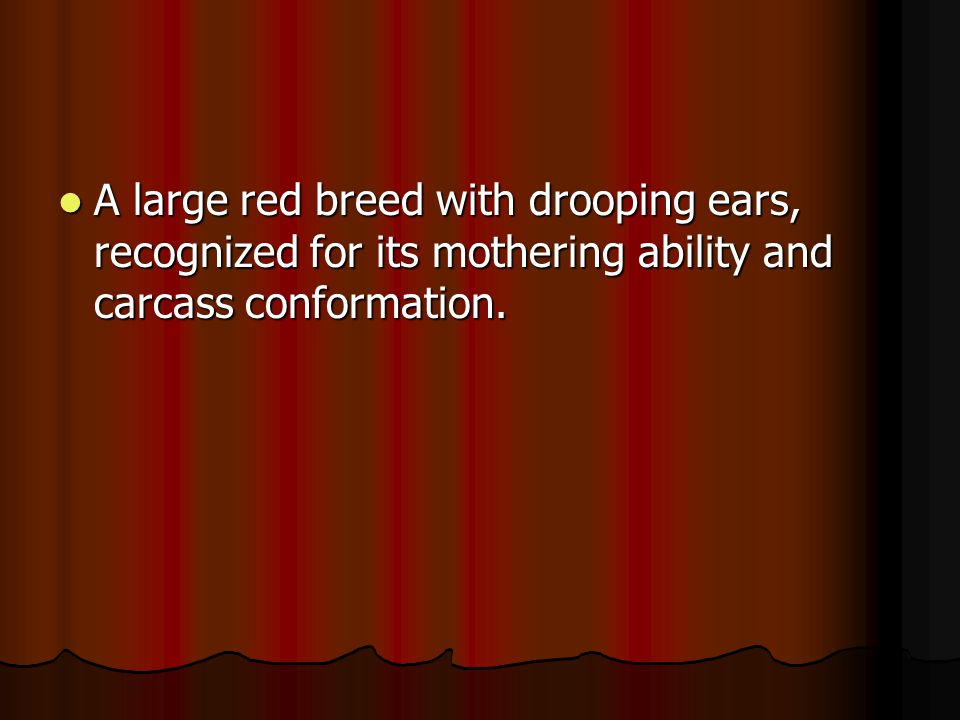 A large red breed with drooping ears, recognized for its mothering ability and carcass conformation.