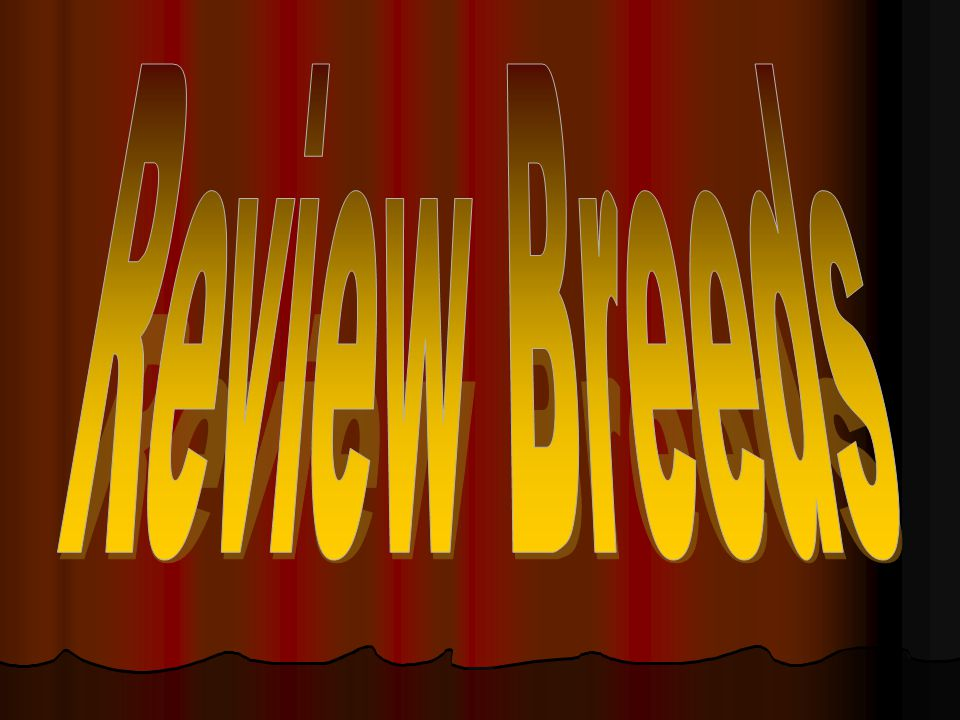 Review Breeds