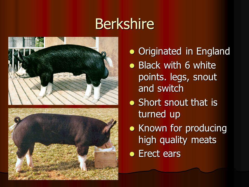 Berkshire Originated in England