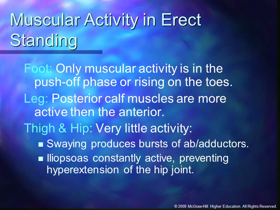 Muscular Activity in Erect Standing