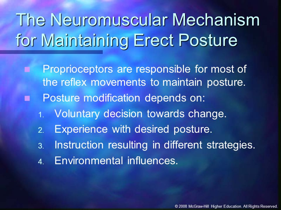The Neuromuscular Mechanism for Maintaining Erect Posture