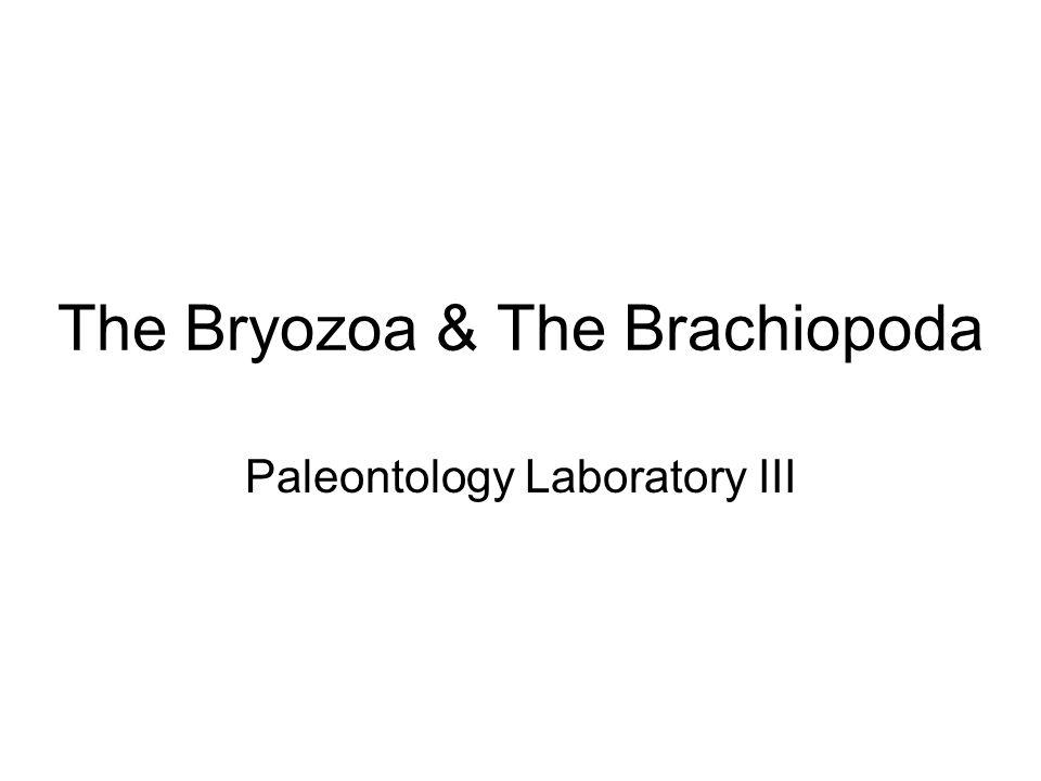 The Bryozoa & The Brachiopoda