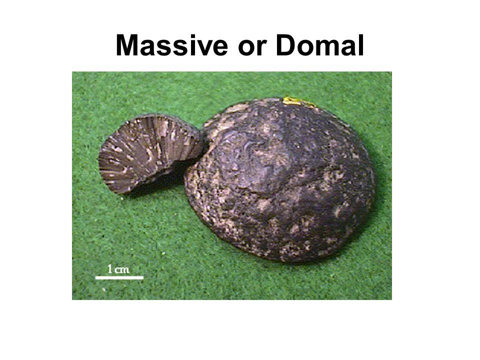 Massive or Domal