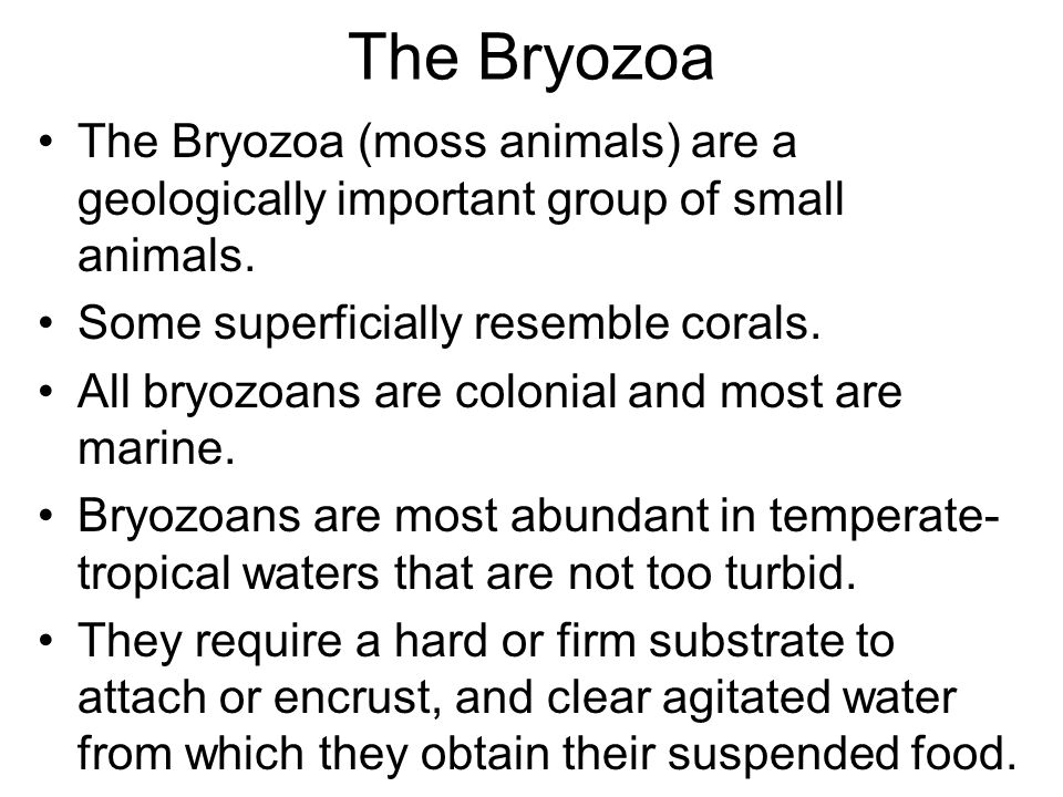 The Bryozoa The Bryozoa (moss animals) are a geologically important group of small animals. Some superficially resemble corals.