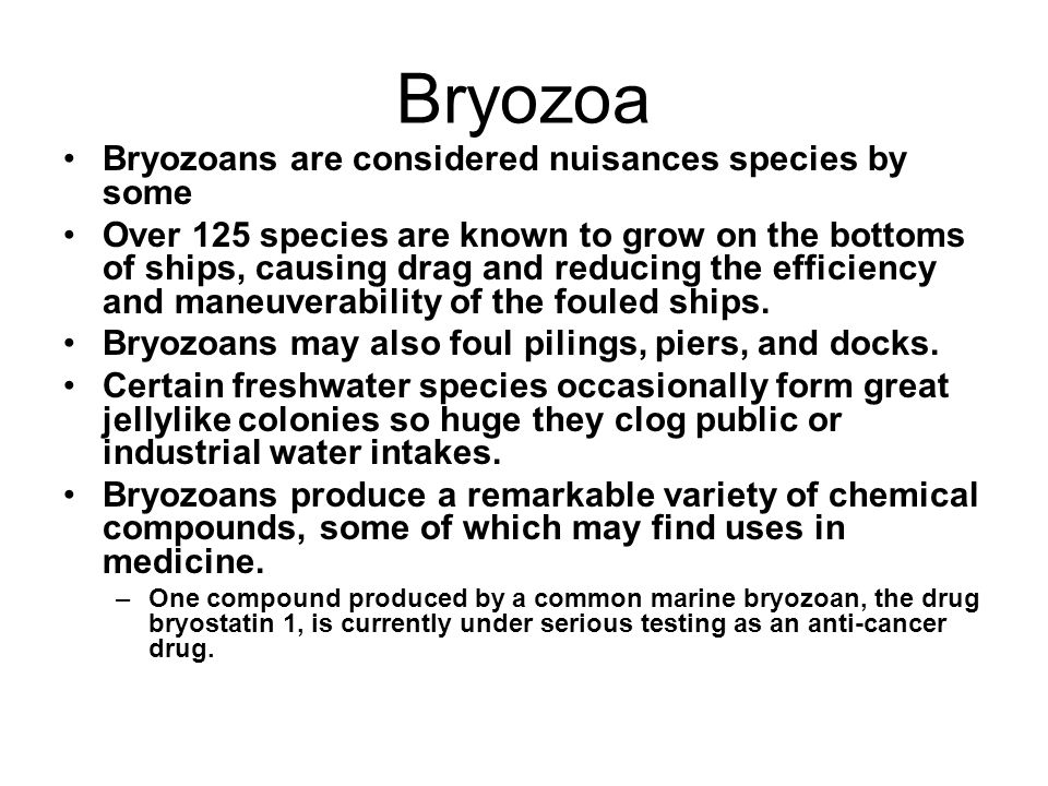 Bryozoa Bryozoans are considered nuisances species by some