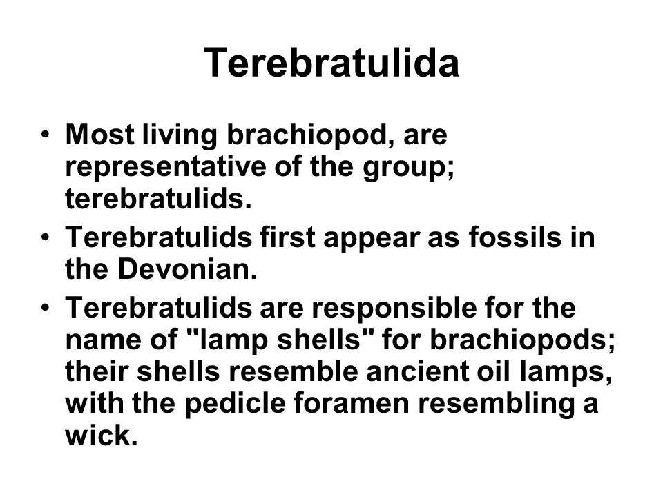 Terebratulida Most living brachiopod, are representative of the group; terebratulids. Terebratulids first appear as fossils in the Devonian.