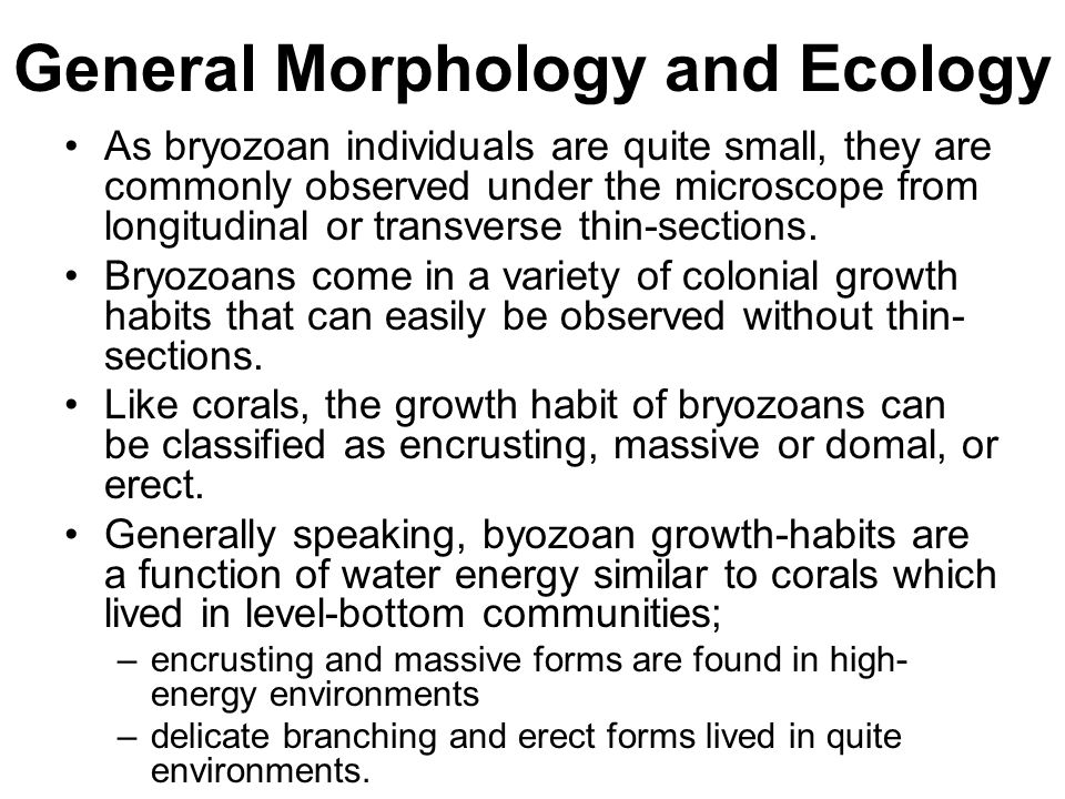 General Morphology and Ecology