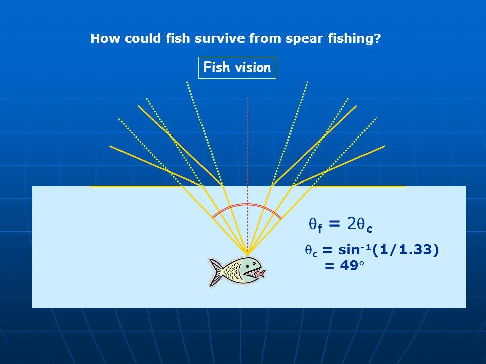 qf = 2qc Fish vision qc = sin-1(1/1.33) = 49