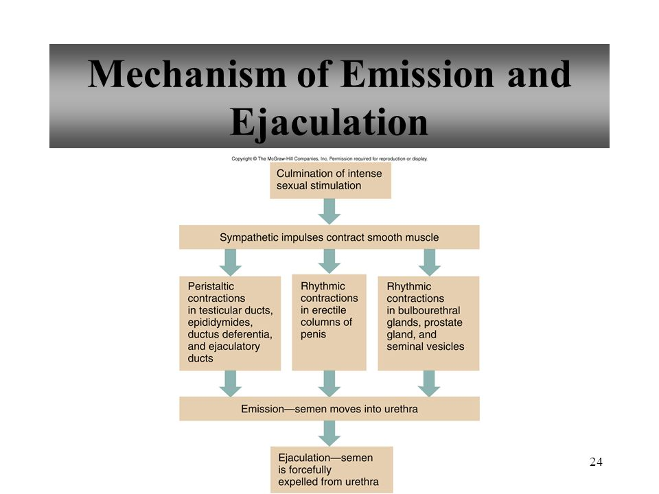 Mechanism of Emission and Ejaculation