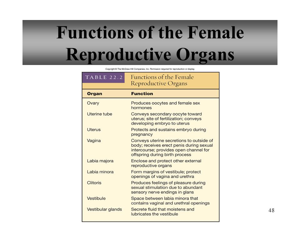 Functions of the Female Reproductive Organs