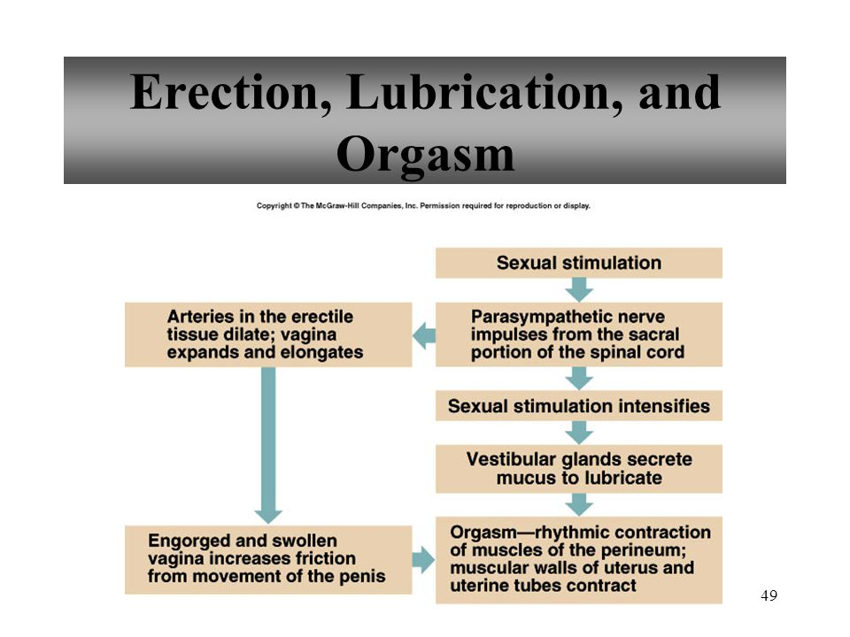 Erection, Lubrication, and Orgasm