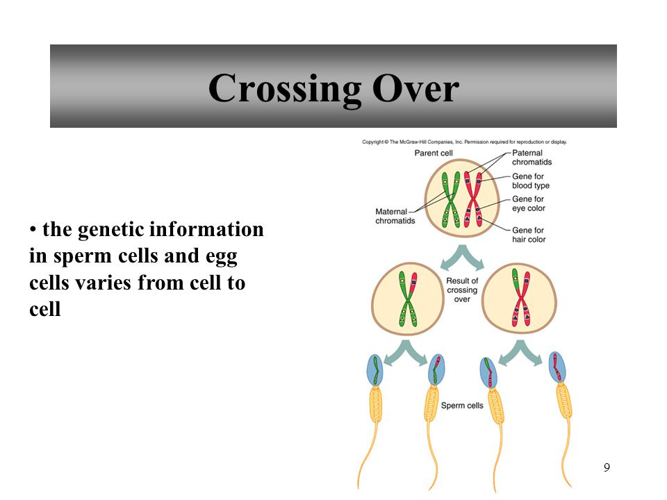 Crossing Over the genetic information in sperm cells and egg cells varies from cell to cell