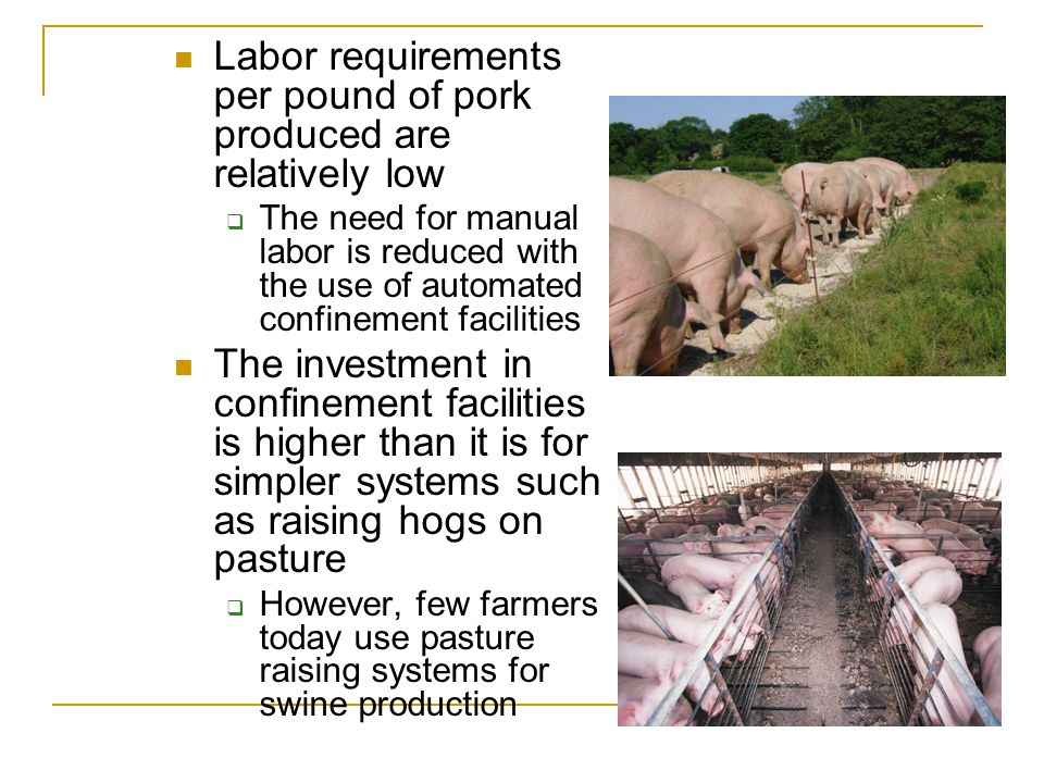 Labor requirements per pound of pork produced are relatively low