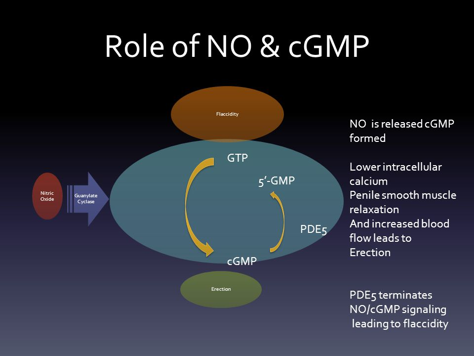 Role of NO & cGMP NO is released cGMP formed