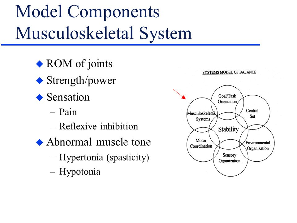 Model Components Musculoskeletal System
