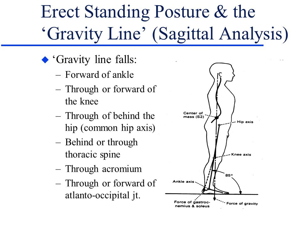 Erect Standing Posture & the 'Gravity Line' (Sagittal Analysis)