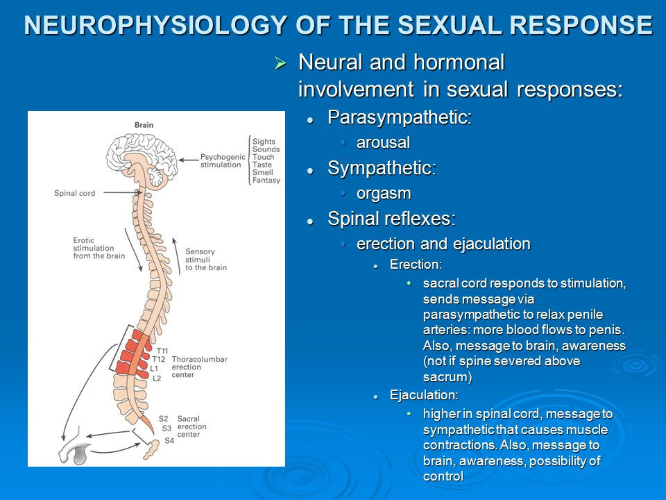 NEUROPHYSIOLOGY OF THE SEXUAL RESPONSE