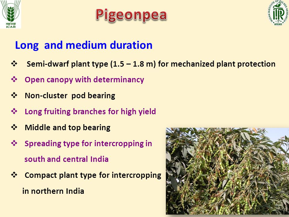 Pigeonpea Long and medium duration
