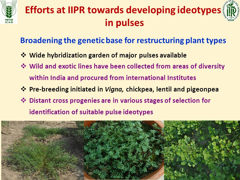 Efforts at IIPR towards developing ideotypes in pulses