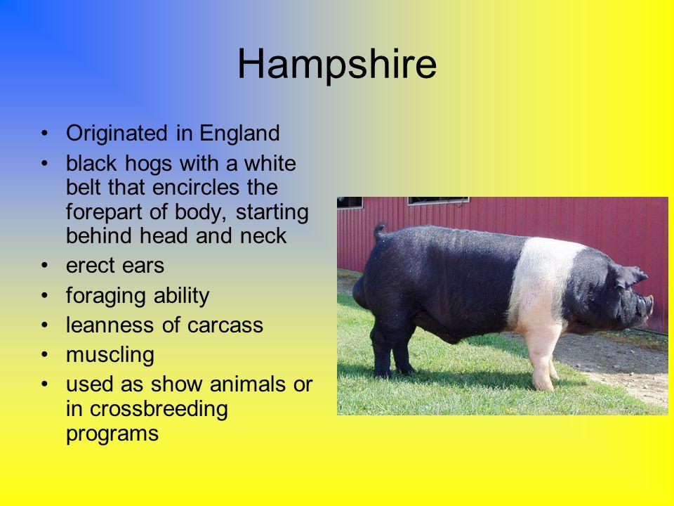 Hampshire Originated in England