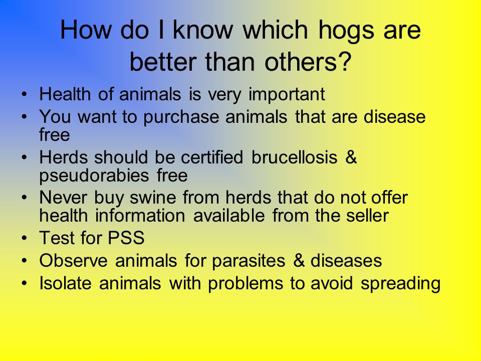 How do I know which hogs are better than others