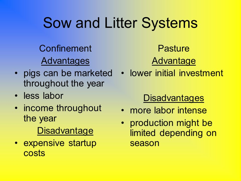 Sow and Litter Systems Confinement Advantages