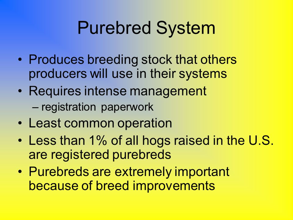 Purebred System Produces breeding stock that others producers will use in their systems. Requires intense management.