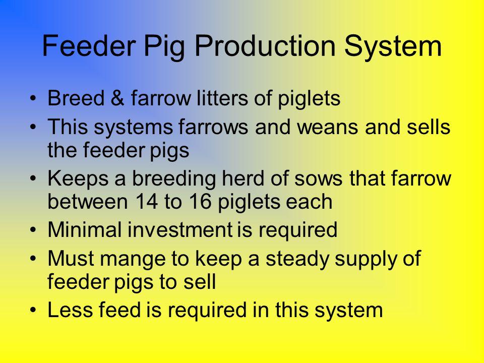 Feeder Pig Production System