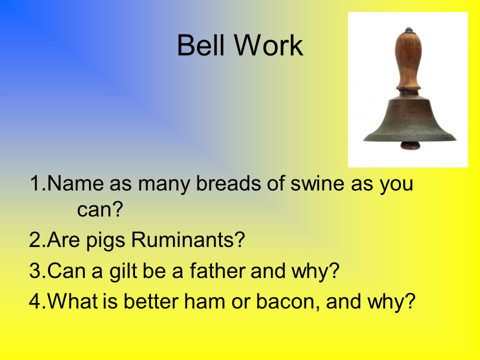 Bell Work 1.Name as many breads of swine as you can